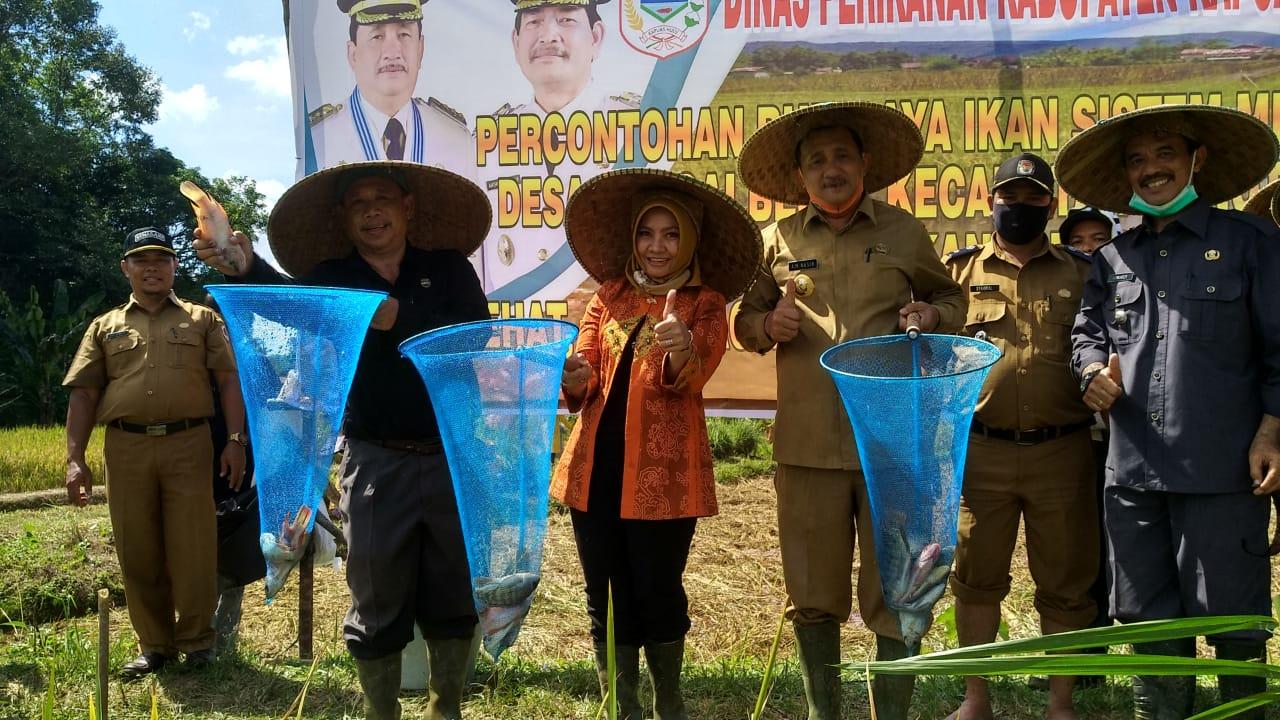 Sistem Minapadi Dinilai Terbukti Tingkatkan Hasil Panen Petani
